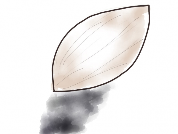 Drawing of an almond and its shadow